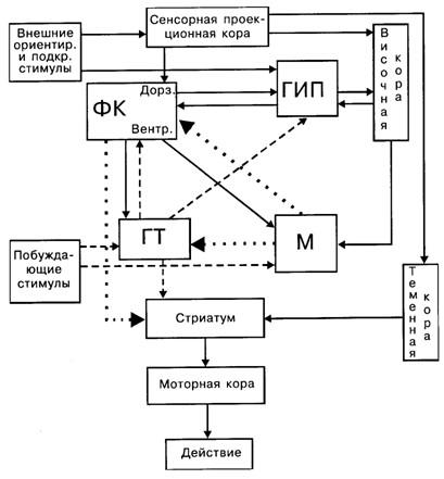 Схема взаимодействия мозговых