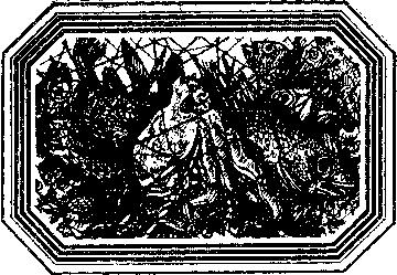 Чозения
