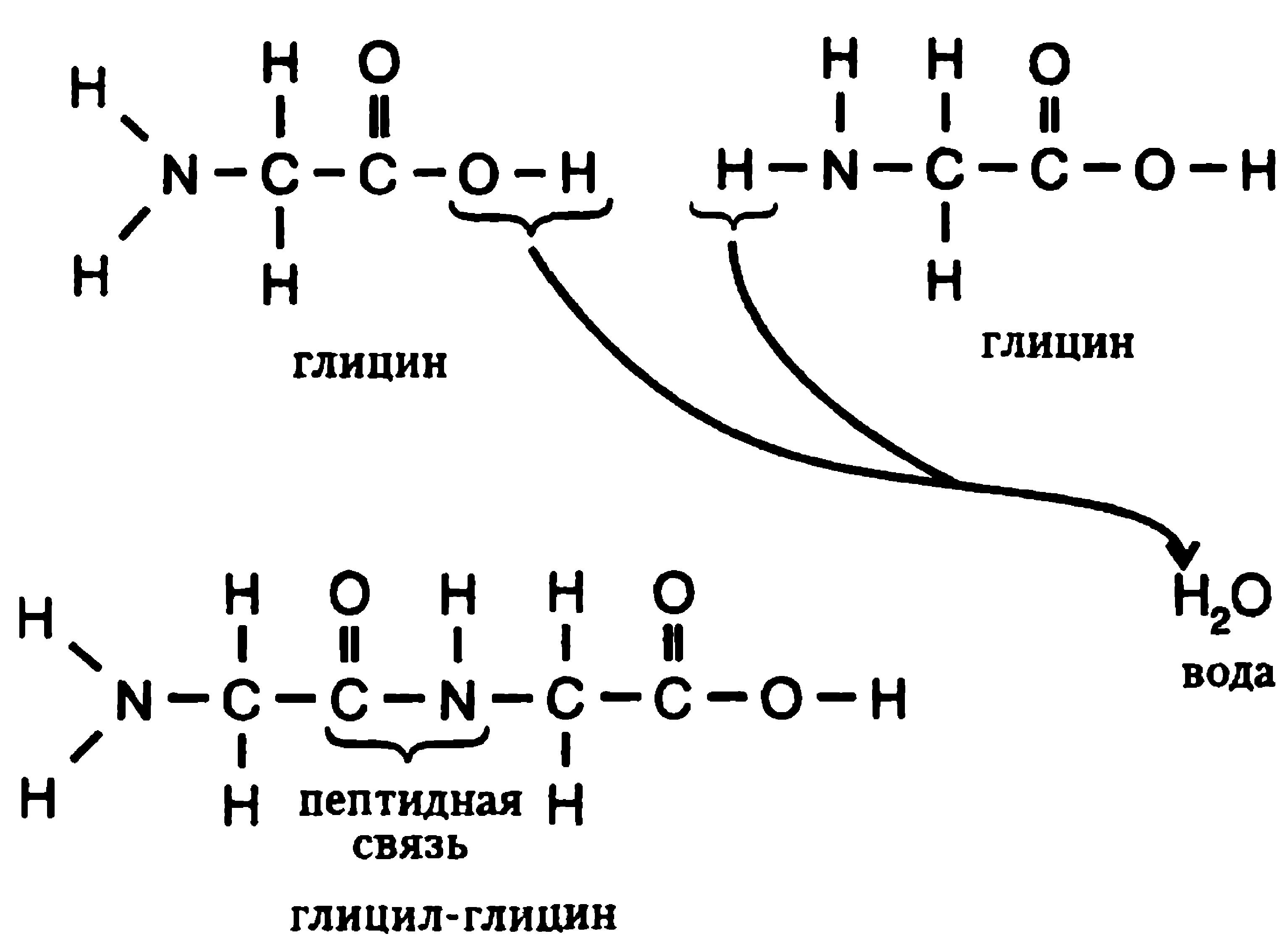 аминокислоты схема строения