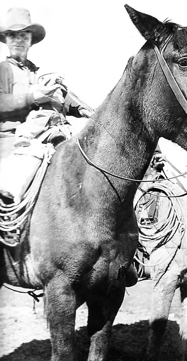 Дикие лошади. У любой истории есть начало