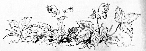 Сказки, найденные в траве