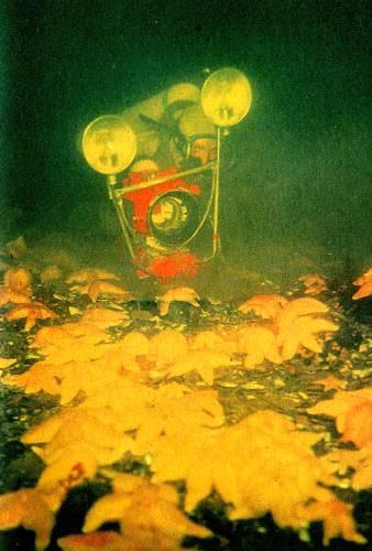 В глубинах пяти морей