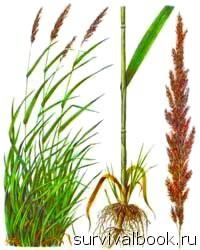 Питание в экстремальных условиях. Дикорастущие растения