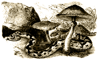 Фосфор: Таинственное приключение на Искии