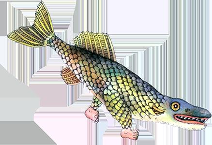 Рыба ходит, колобродит...