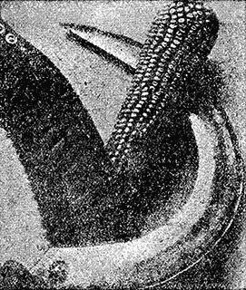 Всемирный следопыт, 1930 № 08