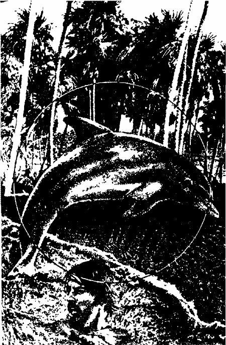 Взгляд с нехоженой тропы