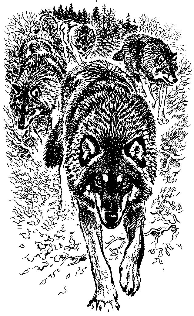 Щупальце сжимало член волка