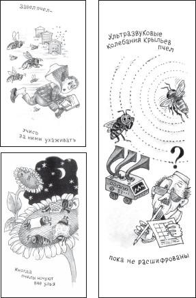 продукты пчеловодства для похудения отзывы