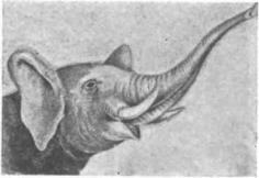 Вымершие животные