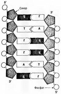 Лестница жизни: десять величайших изобретений эволюции