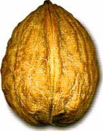 Мир в ореховой скорлупке