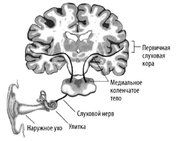 Эволюция разума