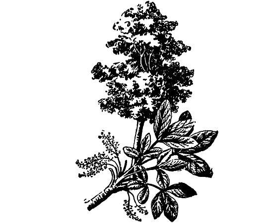 Растения в жизни человека