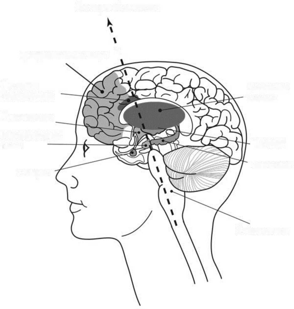 «Мозг Будды: нейропсихология счастья, любви и мудрости»