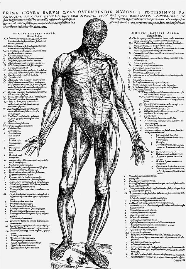 Причудливые аномалии гениталии человекадокументальное видео — photo 2