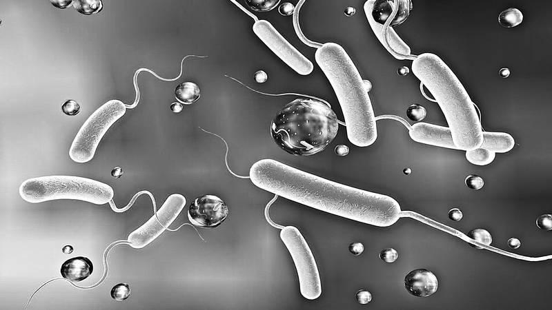 Мифы о микробах и вирусах. Как живет наш внутренний мир