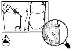 как сделать байку для ловли перепела