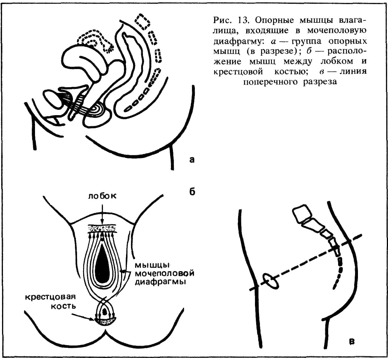 Положение пенис во влагалище