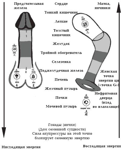 Техники сжатия члена влагалищем фото 603-241