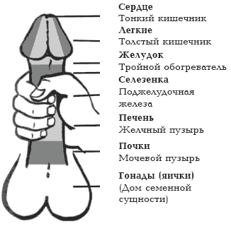 нормальный размер полового члена Балей