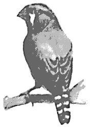 Попугаи от А до Я