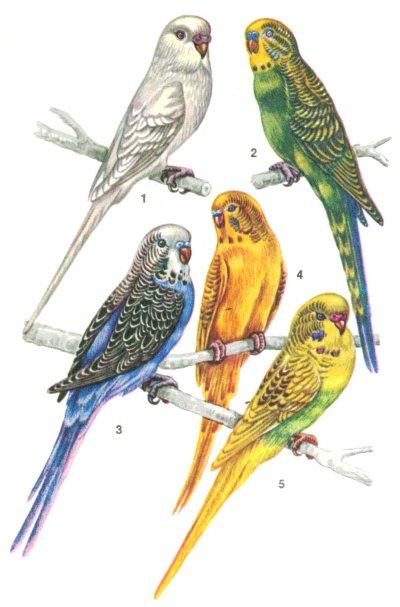 Автоматическая кормушка для попугаев 2