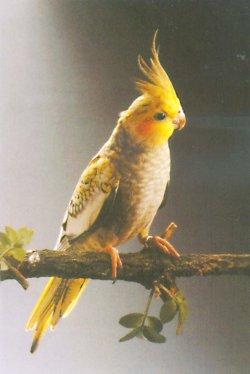 паразиты от попугаев