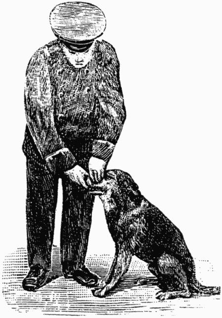 Дрессировка полицейских собак