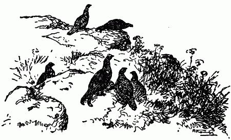 Встречи с животными