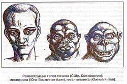 Антропологический детектив. Боги, люди, обезьяны...