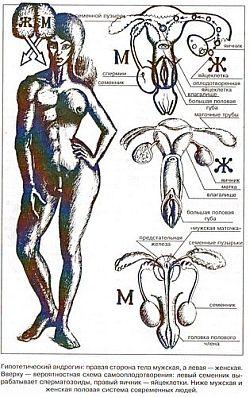 фото половых органов гермафродита