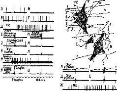 Языки мозга: Экспериментальные парадоксы и принципы нейропсихологии