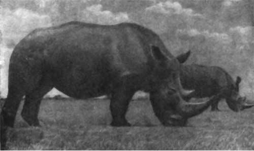 Трагедия диких животных