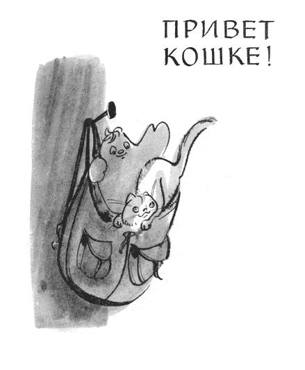 Привет кошке!