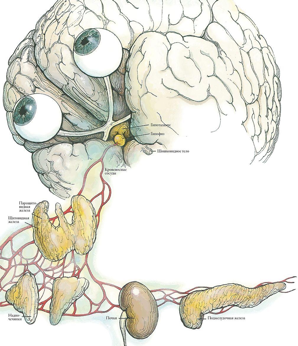 Тайны анатомии