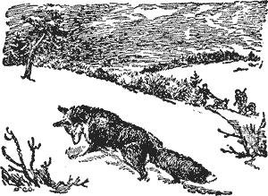 Охота с лайкой