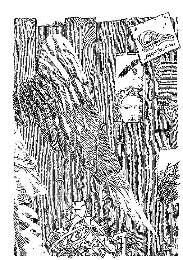 Скеллиг