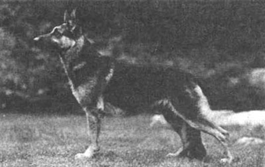Психология собаки. Основы дрессировки собак