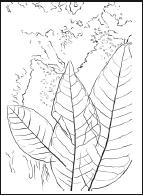 Большая книга аппликаций из природных материалов