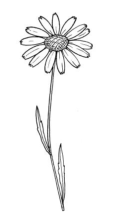 ромашка черно-белая картинка