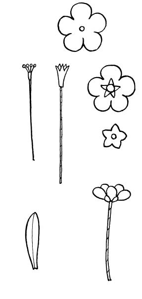 Декоративные цветы из ткани, бумаги, кожи: Практическое руководство