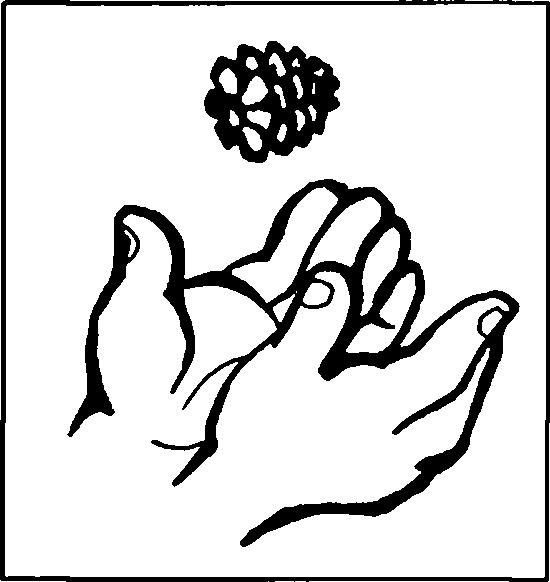 орех фундук раскраска