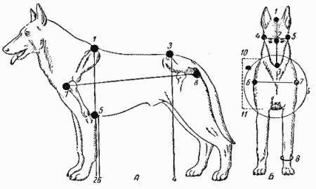 Служебная собака: Руководство
