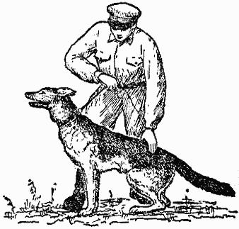 Служебная собака: Руководство по подготовке специалистов служебного собаководства