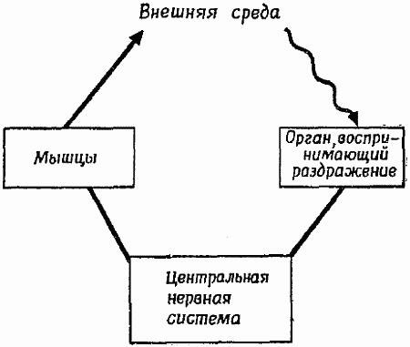 Схема организации простейшего