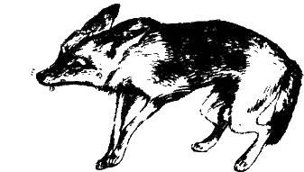 О чем лают собаки