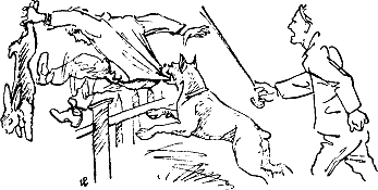 400 советов любителю собак