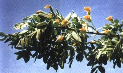 Травы агедель при горманальном сбой