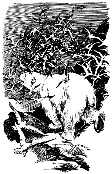 Повесть о белой медведице